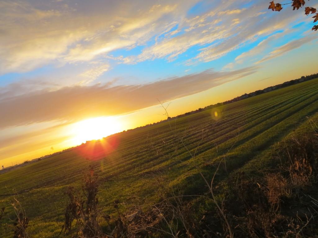 Love my sunrise walks.